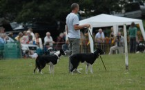 14 Rydal Sheepdog Trials 2006