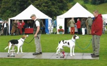 15 Mellbreak Bellman Champion Foxhound Coniston Rascal Reserve Champion 2007
